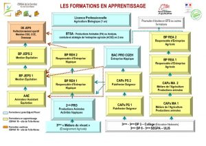 thumbnail of Organigramme des formations CDFAA Site de Naves 2019 2